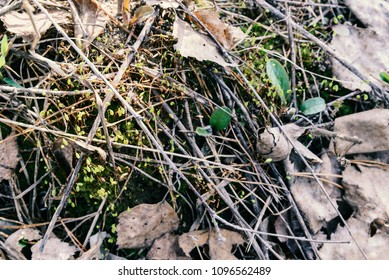 small moss close-up