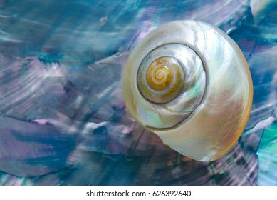 A small mother of pearl shell on a blue abalone or paua veneer, great image for earth day