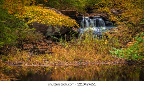 Small mountain brook peaking out from yellow autumn foliage