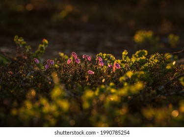 Small mountain plants bathed in evening sunlight