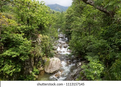 The small mountain stream Drobie in the Ardeche district, France