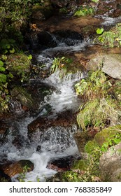 Small mountain stream in forest in the Jeseníky Mountains, Czech Republic