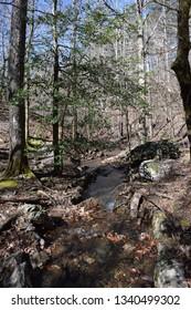 Small mountain stream in Ouachita National Forest, Arkansas