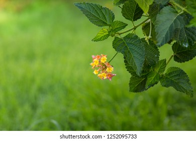Small multicolored flower with green leaves