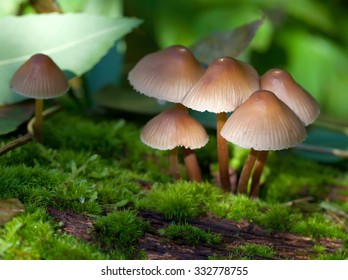 small mushrooms in the forest