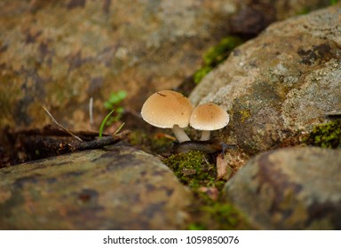 Small mushrooms on the wet soil and born amidst the stones
