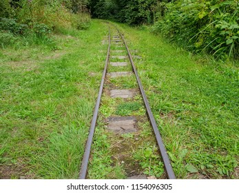 A small, narrow guage train track runnig through tall grass along a cutting in some trees