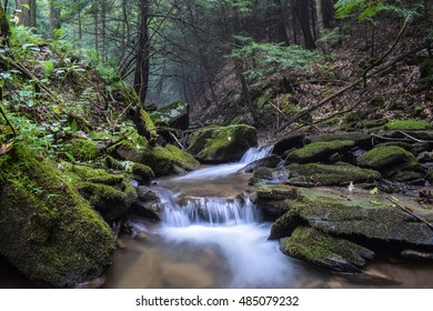 A small native trout stream flowing through the Allegheny Mountains in Pennsylvania.