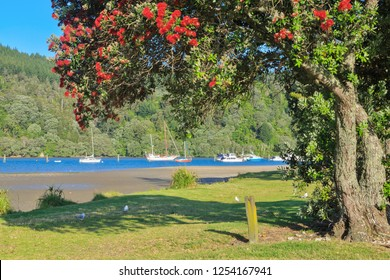Small New Zealand Harbor in Summer. A Flowering Pohutukawa Tree Frames Sailboats on the Water. Whangamata, Coromandel Peninsula, NZ