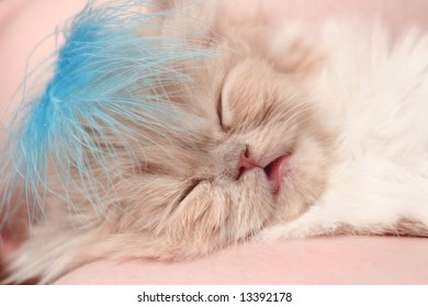 The small nice fluffy kitten sleeps on a sofa