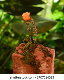 A small orange flower steming from a piece of rock.