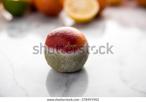 Small Orange Partially Covered with Mold