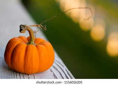 Small orange pumpkin. Conceptual image for Autumn, harvest, Thanksgiving, Helloween, or other occasions.