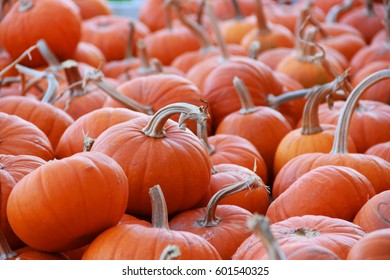 Small orange pumpkins harvested at the pumpkin farm