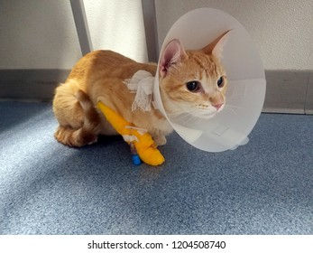 small orange tabby cat with protective cone and bandage