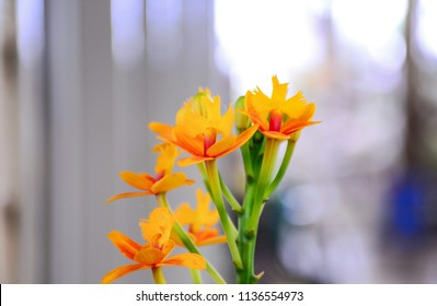 Small orchid flowers with colorful .Orange Orchid