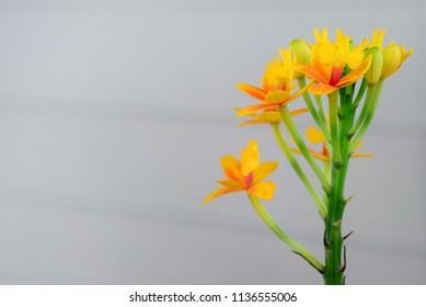 Small orchid flowers with colorful start to the morning.Orange Orchid
