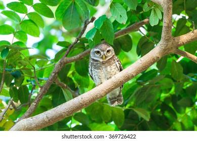 Small owl bird on tree