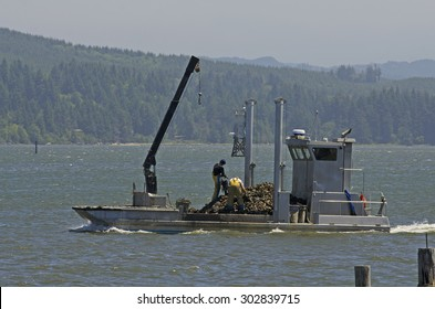 Small oyster trawler or boat hauling fresh Oregon caught oysters to market