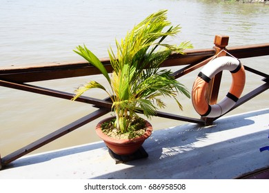 Small palm decorates the deck of a cruise ship on the  Mekong River,  Vietnam