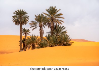 Small palm grove in Sahara