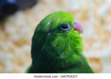 Domesticated Bird Images, Stock Photos & Vectors   Shutterstock