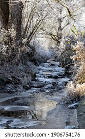 a small, partially frozen brook with trees and bushes and grass