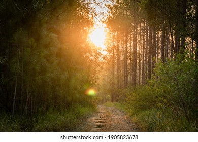 small path through the beautiful forest sunflare golden hour sunset