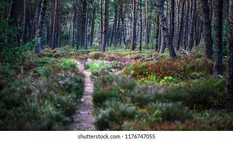 Small pathway in summer forest with various vegetation.