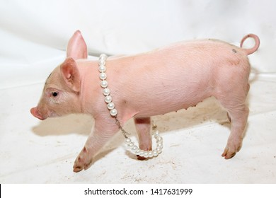 Small Pet Piglet With Pearls Necklace Fun
