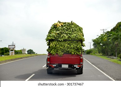 Small pick up carrying a load of Bananas to market in Panama