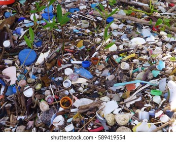 Small pieces of plastic garbage on shore in mangroves, Belize, Central America, 2014