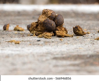 Small pile of horse manure on a road. The view is from road level on the side. There is room for text below.