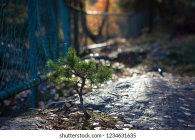 Small pine growing at forest park in sunlight