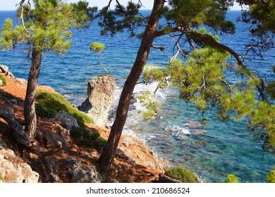Small pine on the rock, Kemer, Turkey