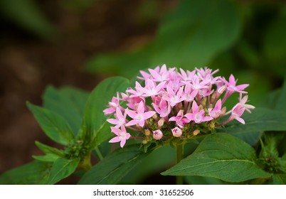 small pink bloom
