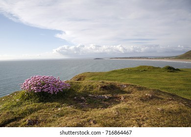 Small Pink Cliff Top Flowers - Thrift