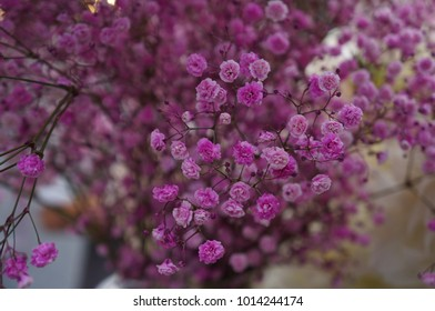 Deep pink small flowers stock images royalty free images vectors small pink and deep pink flowers mightylinksfo Image collections