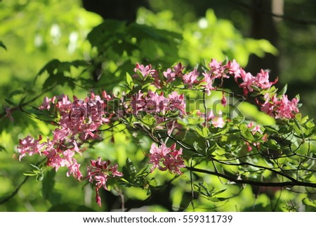 Small pink flower bush stock photo edit now 559311739 shutterstock small pink flower bush mightylinksfo