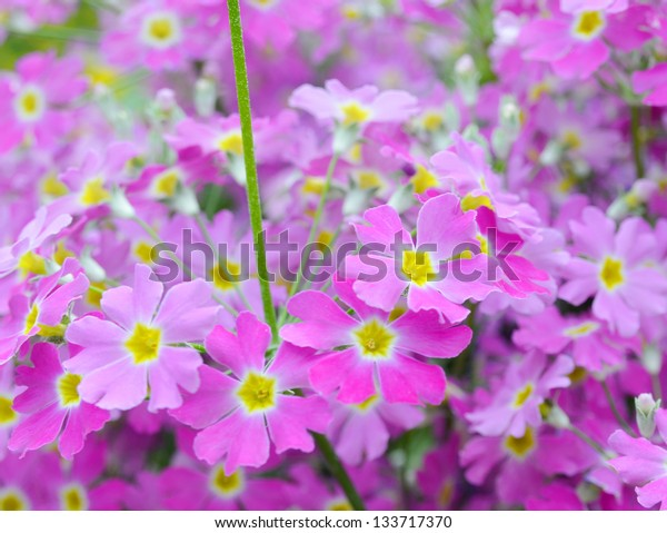 Small pink flowers background