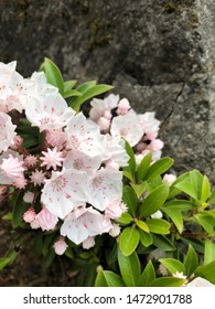 Small pink flowers growing on a rock