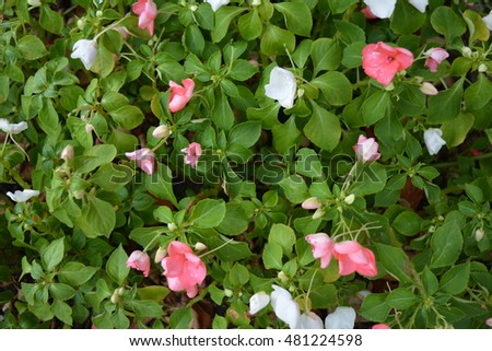 Small Pink White Flowers Stock Photo Edit Now 481224598 Shutterstock