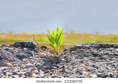 Small plant was born in an inhospitable place - power of life concept image