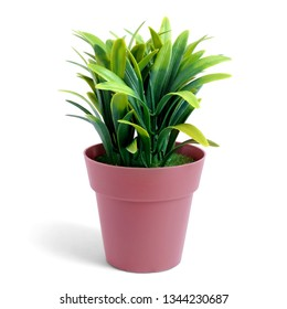 Small plant in a brown pot, isolated white background.This has clipping path