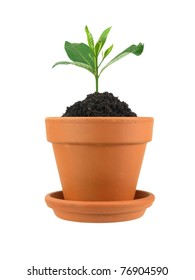 A small plant in a clay pot isolated against a white background