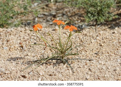 Small plant in a drought area