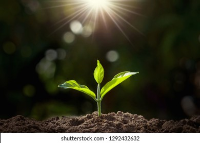 small plant growing in garden with sunlight. earth day concept - Shutterstock ID 1292432632
