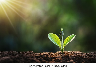 small plant growing in garden with sunlight. earth day concept
