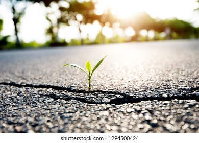 Small plant growing on cracked street.