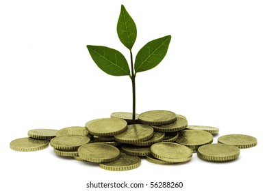 A small plant growing out of gold coins symbolizing investment and earning interest.